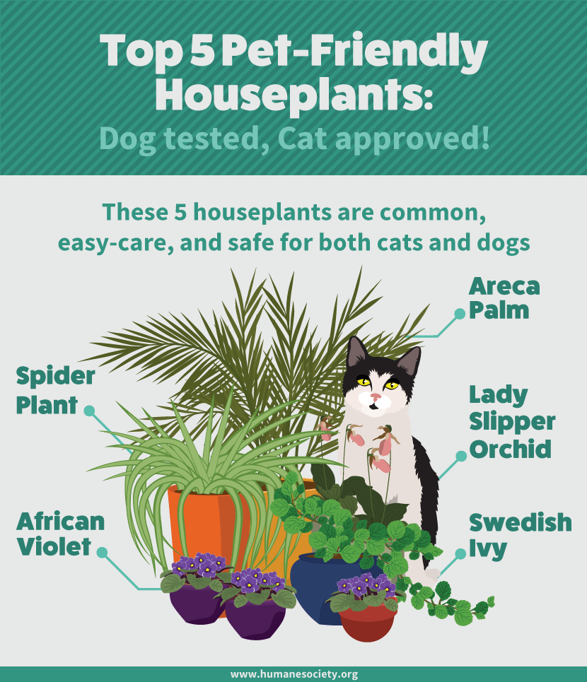 safe house plants for pets