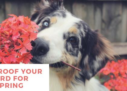dog holding flower in mouth
